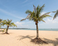 Silhouette de palmier sur le coucher du soleil de paradis Photographie stock libre de droits