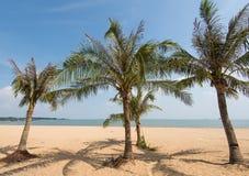Silhouette de palmier sur le coucher du soleil de paradis Image libre de droits