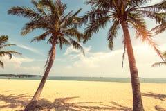 Silhouette de palmier sur le coucher du soleil de paradis Images libres de droits
