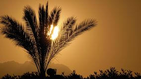 Silhouette de palmier tropical au coucher du soleil banque de vidéos