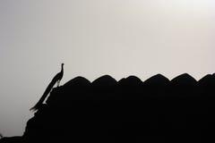 Silhouette de paon Images libres de droits