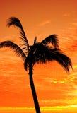 Silhouette de paume Photographie stock