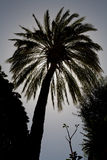 Silhouette de paume Photographie stock libre de droits