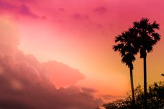 Silhouette de paume Photo stock