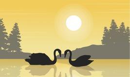 Silhouette de paysage de beauté de cygne sur le lac Images stock