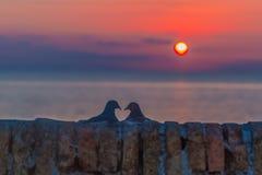 Silhouette de perruche à la hausse du soleil Photos libres de droits