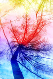Silhouette de photo d'un arbre de mélèze Images libres de droits