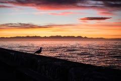 Silhouette de pigeon de lever de soleil photographie stock libre de droits