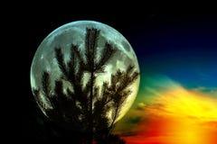Silhouette de pin sur le fond de la pleine lune Fond fantastique photos stock