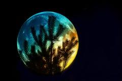 Silhouette de pin sur le fond de la pleine lune Fond fantastique image stock