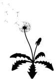 Silhouette de pissenlit Illustration de Vecteur