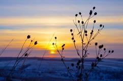 Silhouette de plan rapproché d'herbe contre le ciel de coucher du soleil photo stock