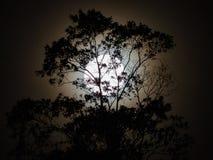 Silhouette de pleine lune avec des arbres Image stock