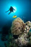 Silhouette de plongeur autonome au-dessus du récif coralien Photographie stock libre de droits