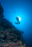 Silhouette de plongeur sur un mur Images libres de droits