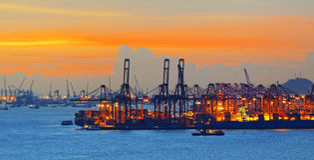 Silhouette de plusieurs grues dans un port Photos libres de droits