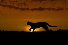 Silhouette de puma Image libre de droits