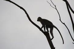 Silhouette de singe Image libre de droits