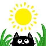 Silhouette de tête de visage de chat noir recherchant pour exposer au soleil briller Baisse de rosée d'herbe verte Personnage de  Photo libre de droits