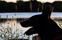 Silhouette de tête du ` s de chien Photographie stock