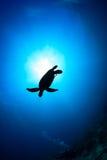 Silhouette de tortue de mer avec le rayon de soleil Photographie stock libre de droits