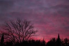 Silhouette de Treeline avec le coucher du soleil coloré Photos libres de droits