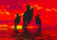 Silhouette de trois chevaux   Photographie stock libre de droits
