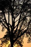 Silhouette de tronc d'arbre avec la lumière de coucher du soleil Image libre de droits