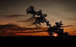 Silhouette de vieil arbre pendant le coucher du soleil africain Images libres de droits