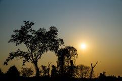 Silhouette de vue de paysage Image stock