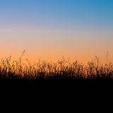 Silhouette de zone d'herbe Image libre de droits