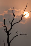 Silhouette of dead tree Royalty Free Stock Photography