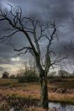 The silhouette of a dead tree against a dark cloudy sky Stock Photos