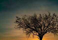 Silhouette dead tree on beautiful sunset or sunrise on golden sky. Background for peaceful and tranquil concept. Light for hope. And spiritual. Awakening and stock photography