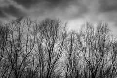 Silhouette dead tree on dark dramatic grey sky and clouds background for scary, death, and peace concept. Halloween day. Background. Art and dramatic on black royalty free stock photo