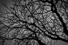 Silhouette dead tree on dark dramatic grey sky and clouds background for scary, death, and peace concept. Halloween day royalty free stock photography