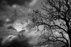 Silhouette dead tree on dark dramatic sky background for scary or death. Halloween night. Hopeless, despair, and lament concept. Creepy and spooky scene. Scary royalty free stock photo