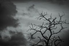 Silhouette dead tree on dark dramatic sky background for scary or death. Leafless tree branch. Hopeless, despair,sad and lament stock images