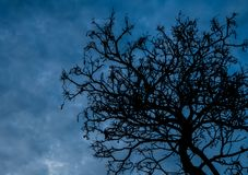 Silhouette dead tree on dark sky background for scary or death Stock Photography