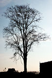 Silhouette of dead tree. Stock Photos