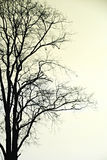 Silhouette of dead tree. Royalty Free Stock Photography