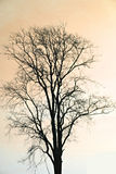 Silhouette of dead tree. Royalty Free Stock Images