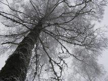 Silhouette of Dead Tree in Fog Stock Image