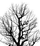 Silhouette Dead Tree on Isolated White Background Stock Images