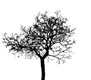 Silhouette dead tree isolated on white background for scary or death with clipping pat. H. Copy space Royalty Free Stock Photography