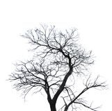 Silhouette dead tree isolated on white background for scary or death with clipping path. Stock Images