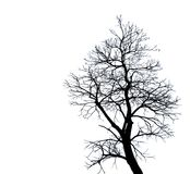 Silhouette dead tree isolated on white background for scary or death with clipping path. Copy space Stock Photos