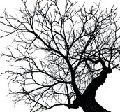 Silhouette dead tree isolated on white background. For scary or death with clipping path Royalty Free Stock Photos