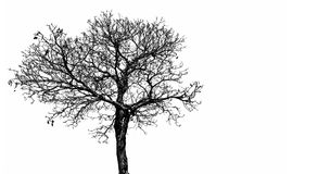 Silhouette dead tree  isolated on white background for scary, death, and peace concept. Halloween day background. Art. And dramatic object Royalty Free Stock Image