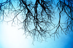 Silhouette of dead Tree without Leave Royalty Free Stock Photos